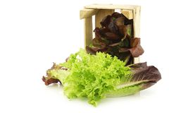 Fresh romaine and red lettuce in a wooden crate Stock Images