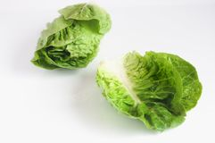 Green roman lettuce isolated on the white background stock photo