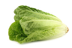 Fresh roman lettuce Stock Photos