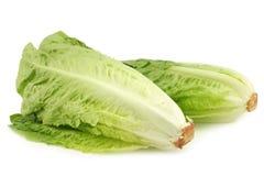 Fresh roman lettuce stock photography