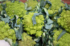 Fresh romanesco broccoli on the market. Agriculture background. Top view. Close-up Stock Photos