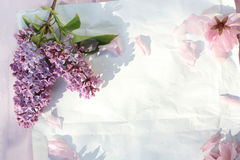 Fresh, romantic lilac branches on white subtle background Royalty Free Stock Photos