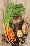 Fresh root vegetables on wood Stock Images