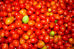 Fresh rosa tomatoes background. Small tomatoes Royalty Free Stock Photo
