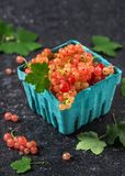 Fresh rosa and white currant berries with water drops in a turquoise cardboard box. stock photo
