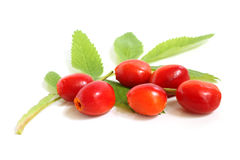 Fresh rose hips with leaves Royalty Free Stock Image