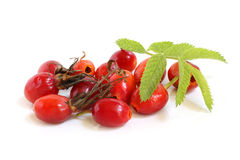 Fresh rose hips with leaves Royalty Free Stock Photos