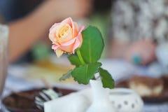 Fresh rose in white vase Stock Photo