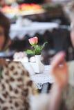 Fresh rose in white vase Stock Image