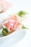 Fresh rosebuds Stock Images