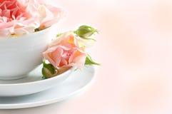 Fresh rosebuds Stock Image