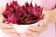 Fresh roselle flower Royalty Free Stock Images