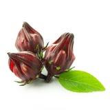 Fresh roselle fruit Stock Photography