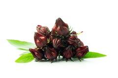 Fresh roselle fruit Stock Photo