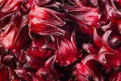 Fresh Roselle isolate on white background Stock Image