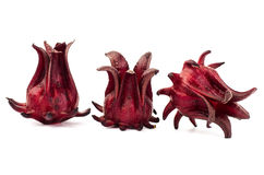Fresh Roselle Stock Photography