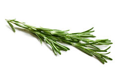 Fresh rosemary Stock Images