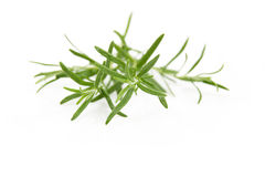 Fresh rosemary. Rosemary isolated on white background, selective focus Stock Photos