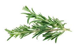 Fresh rosemary Royalty Free Stock Image