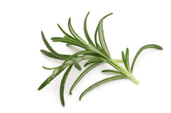 Fresh rosemary Stock Image