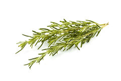 Fresh rosemary Royalty Free Stock Photography
