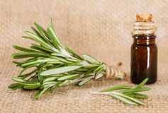 Fresh rosemary and a bottle of rosemary essential oil royalty free stock photos