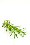 Fresh rosemary branch. Isolated on white background Stock Photo