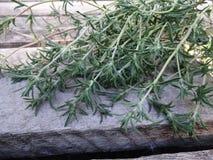 Fresh Rosemary stock photos