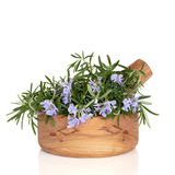 Fresh Rosemary Herb Stock Photos