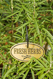 Fresh rosemary Herb Stock Photography