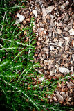 Fresh rosemary herb Royalty Free Stock Photography