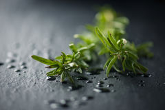 Fresh Rosemary herb Stock Images