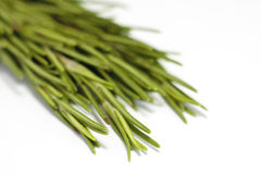 Fresh rosemary. Herb on a white background Royalty Free Stock Photography