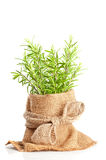 Fresh Rosemary Herbs Stock Images