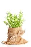 Fresh Rosemary Herbs Stock Images