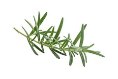 Fresh rosemary isolated on white background. italian herb. Stock Photography