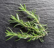 Fresh rosemary leaves. stock photos