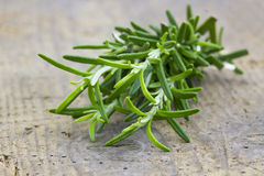 Fresh rosemary (Rosmarinus officinalis) Royalty Free Stock Photos