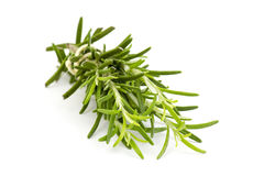 Fresh rosemary (Rosmarinus officinalis) Stock Image