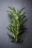 Fresh Rosemary Stock Image