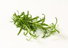 Fresh rosemary sprigs Stock Photos
