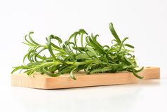 Fresh rosemary sprigs Stock Image