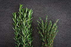 Fresh Rosemary Thyme Herbs Stock Photos