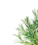 Fresh rosemary twigs border, isolated Royalty Free Stock Image