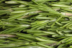 Fresh rosemary twigs. As background stock photo