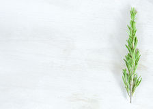 Fresh rosemary twigs on white wooden background Stock Images