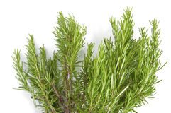 Fresh rosemary on white background Stock Photography