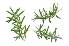 Fresh rosemary  on white background. italian herb. Stock Photos