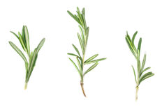 fresh rosemary on a white background Stock Photos