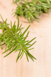 Fresh rosemary Stock Photography